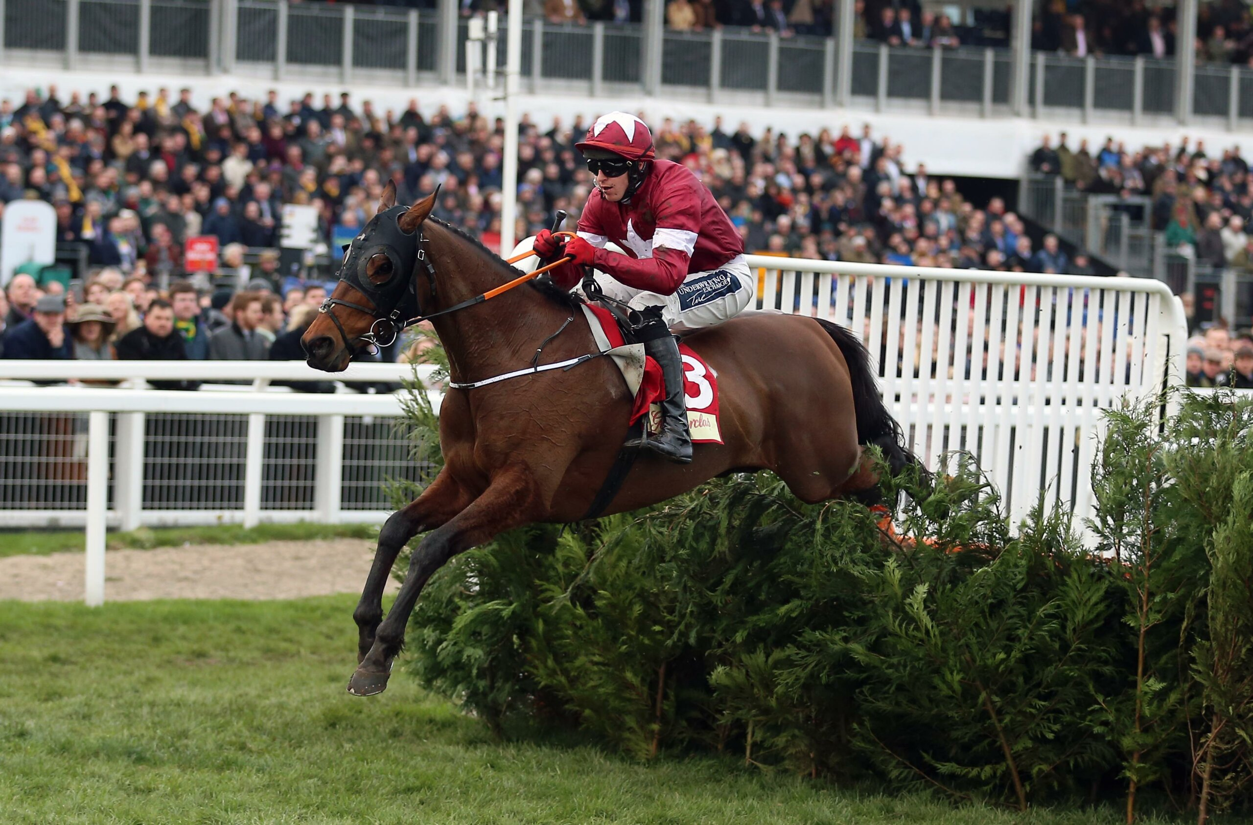 Tiger Roll: the little legend seekis another win in the Cross-Country Chase as he prepares for the Grand National