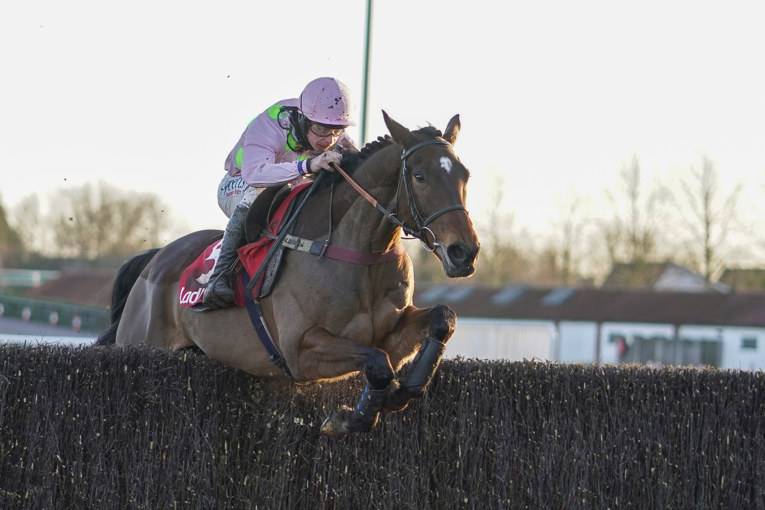 Royale Pagaille entered Cheltenham picture with stunning Peter Marsh chase success
